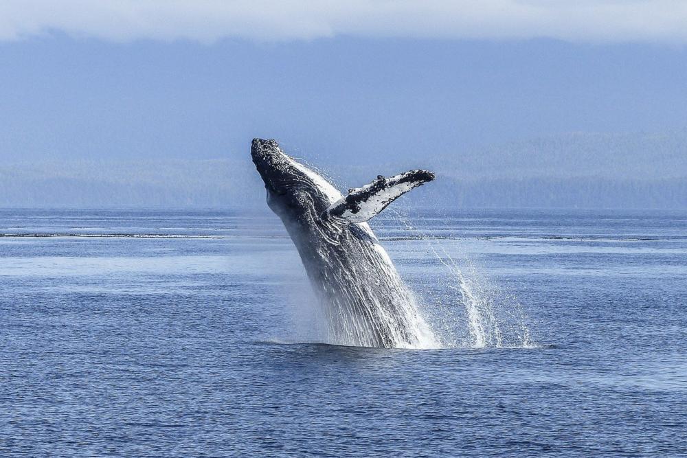 Whaling Phishing Attack